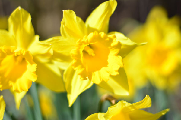 Frühlingsbeginn auf dem Bauernhof